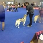 Evropská výstava psů 23.10.2014 Brno Excelent ! Kim Leblanc