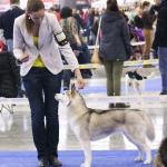 Hanácká národní výstava psů Brno 5.1.2014 V1 CAC Lenka Frnčová