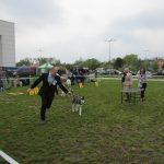 MVP Opole 24.4.2016 VN2, rozh. Wendy Baker (AU) (9)