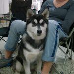 Nitra dog 3 (3)
